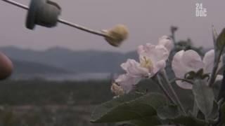 Когда пчёлы исчезли