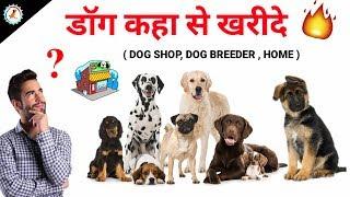 Dog Buy Tips / In Hindi / Kaha se dog kharide / Dog Shop,Dog Breeder,Home