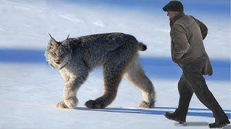 10 Most Beautiful Rare Wild Cats on Planet Earth