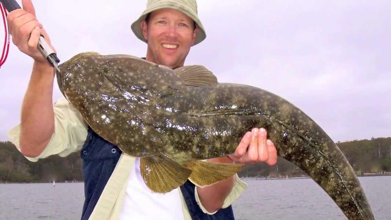 "REEL IT IN - "" How To Catch Big Dusky Flathead"" PART 1 ... - photo#2"