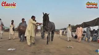 84/Best Horse Dance Punjab Meerik Sial Jhang 2018/ Bani Syed Qalandar Sultan