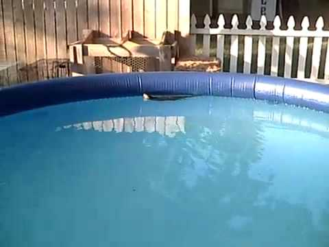 Squirrel Swimming Around In Pool Youtube