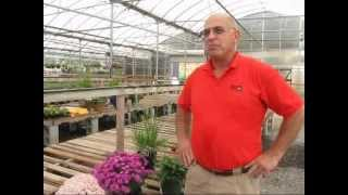 Preparing Your Plants for Winter- Meadows Farms Nurseries