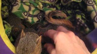 Baby Squirrels Teach Love