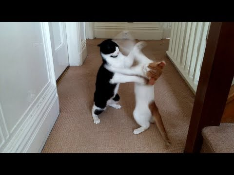 Epic Cat fight : 4K Ultra Hd - Original