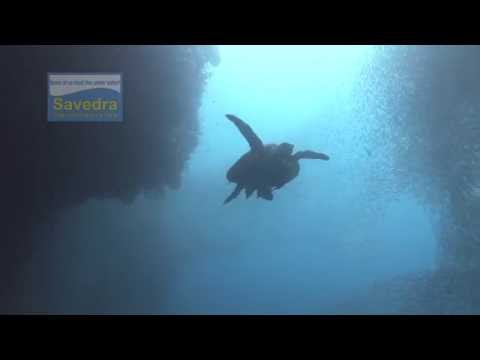 sardines moalboal savedra