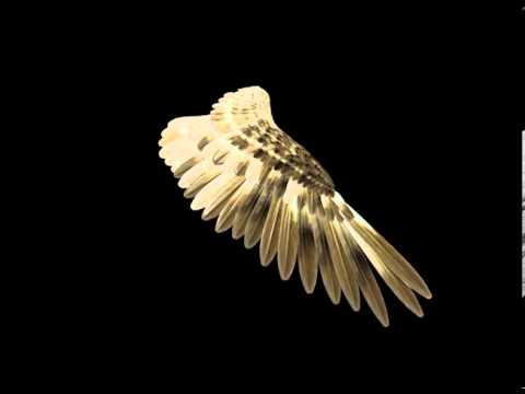 bird wing 3d study youtube
