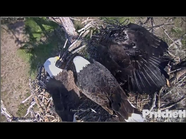 swfl-eagles-e9-s-small-fish-tail-dinner-4-14-17