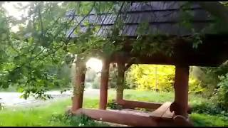 BIESZCZADY: Spotkanie z niedźwiedziem w Stuposianach. Zwierzę spacerowało tuż przy turystach