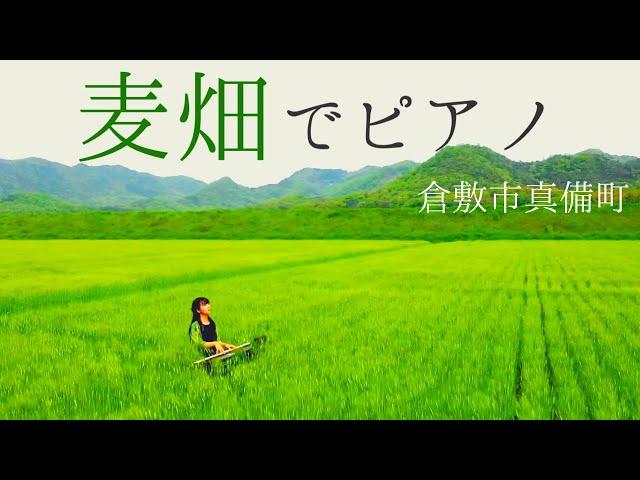 【Beautiful Japan × Pianist】日本の絶景とピアノ音楽で旅する「116秒」〜真備町麦畑〜/「浮世音(UKIYONE)」Vol.29    山地真美