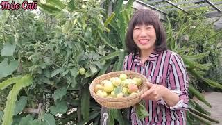 Hái bốn loại táo trong vườn nhà ở Mỹ