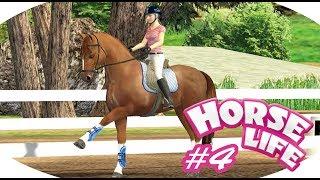 Horse Life 2 #4- Więcej niż jedno zwierzę to...