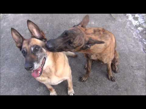 Amazin dog tricks with 2 dogs