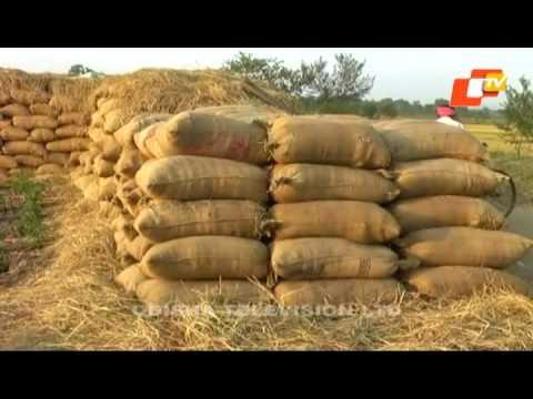CAG report reveals irregularities in Paddy Procurement in Odisha