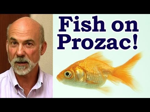 Sarah Jacobs - All the drugs in the water supply are making the fish act weird