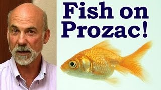 Psych Drugs in Drinking Water, Fish on Prozac | Austin Wellness Mental Health Truth Psychetruth