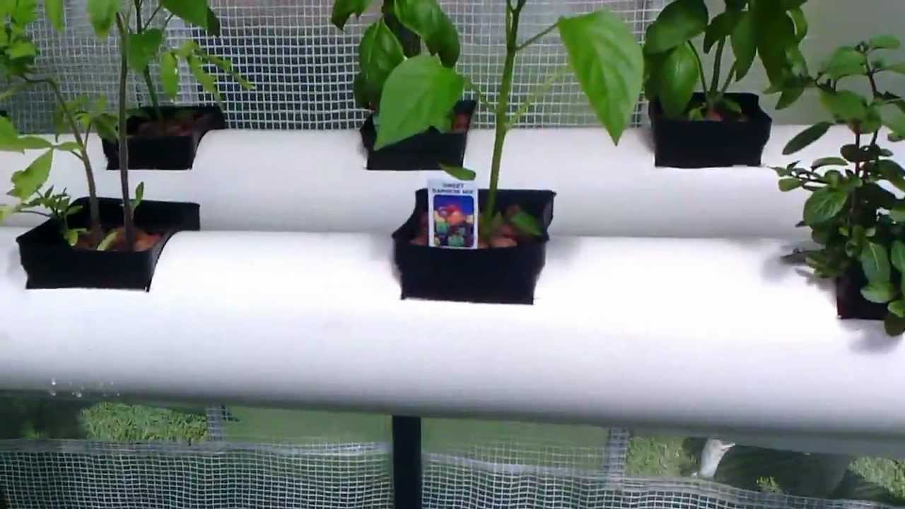 Aquaponics System For Under 200 Youtube