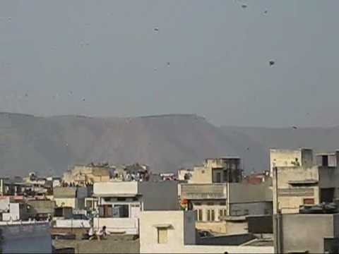 makar-sankranti,-kite-festival-in-jaipur:-sponsored-by-vardhaman-infotech