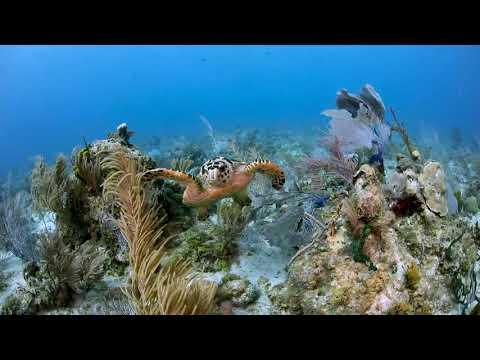 Cayman Islands: Bonnie's Arch Grand Cayman