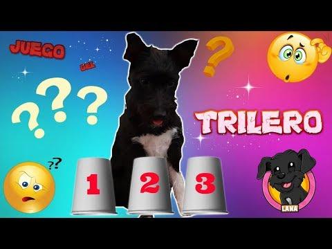 Mi perro cachorro juega al Trilero! Funny dogs/ Animales divertidos/ Lana
