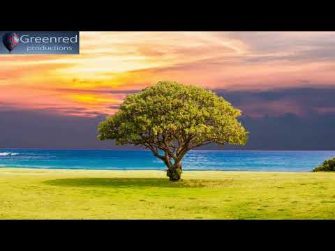 Serotonin Release Music with Alpha Waves - 10 Hz Binaural Beats, Healing Music, Happiness Frequency