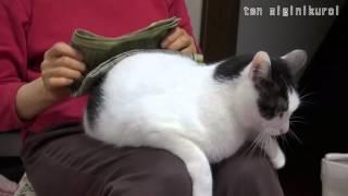 自ら進んで志願する猫、洗濯物のたたみ台に