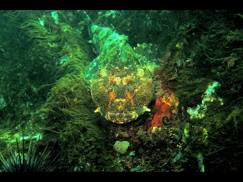Autos By Nelson >> Diving @ Glass Beach. Fort Bragg, California.USA - YouTube
