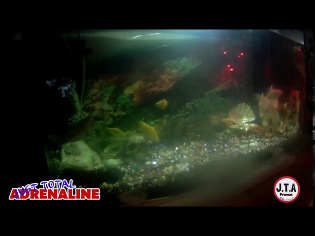 Fish Swimming - 4K Quality Video of fish swimming in our tropical tank @JTAPromos - JTAPromos.net 5