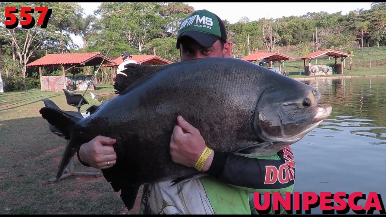 Unipesca - Pescaria com os amigos Doentes por Pesca - Fishingtur na TV 557