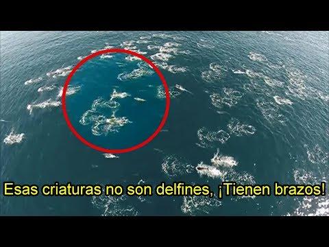 Sirenas Reales Grabadas Mientras Nadaban Con Delfines Youtube