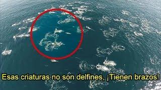 Sirenas REALES Grabadas Mientras Nadaban con Delfines