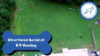 Structured Social @ K9 Heeling