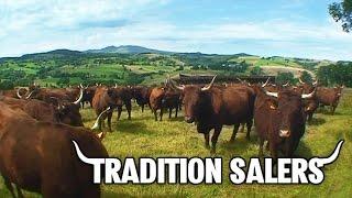 Télé Regain - Tradition Salers