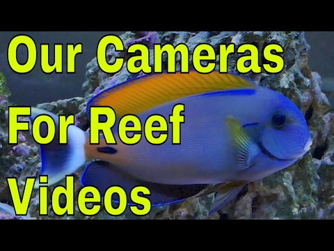 best cameras for youtube : filming saltwater aquariums
