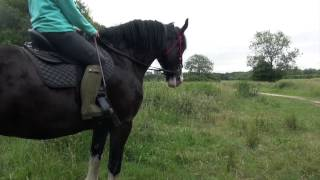 Shire horse riding - backing and hacking a young heavy horse Mp3