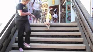 Puppy In Training Tv - Ep19 - Lost Files - Sawdust Festival