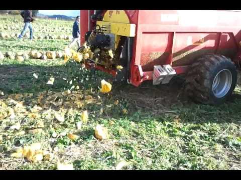 Aktualne Zbiór pestek dyni/ Pumpkin Seed Harvester, Moty + Case CVX 175 JJ12