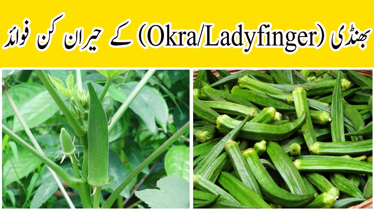 Bhindi Ke Fawaid In Urdu Hindi Amazing Benefits Of Lady Finger Okra Or