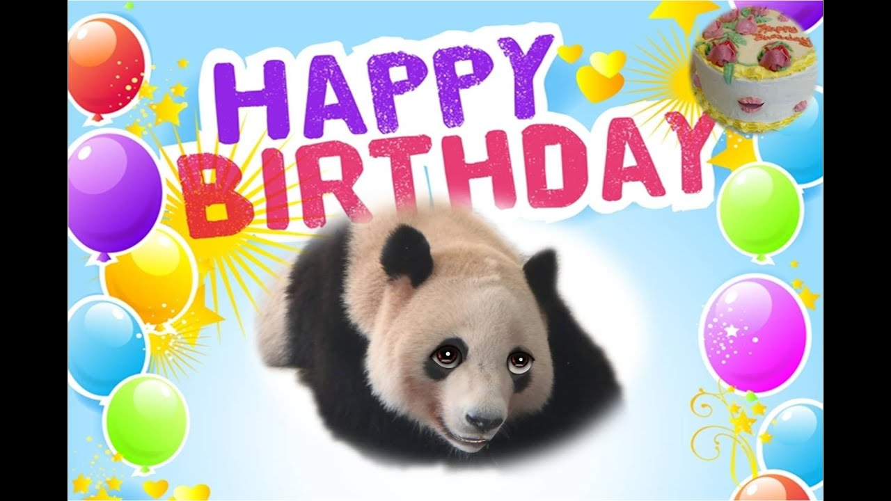 maxresdefault funny panda singing happy birthday to you youtube