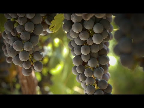 The Unquenchable Thirst for Wine... As an Investment