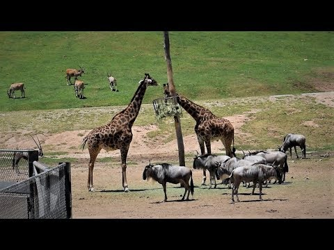 San Diego Zoo Tour (Safari Park)