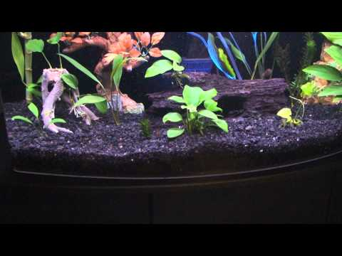 new eco complete plant substrate