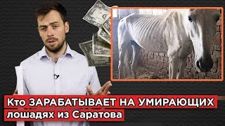 Кто зарабатывает на умирающих лошадях из Саратова