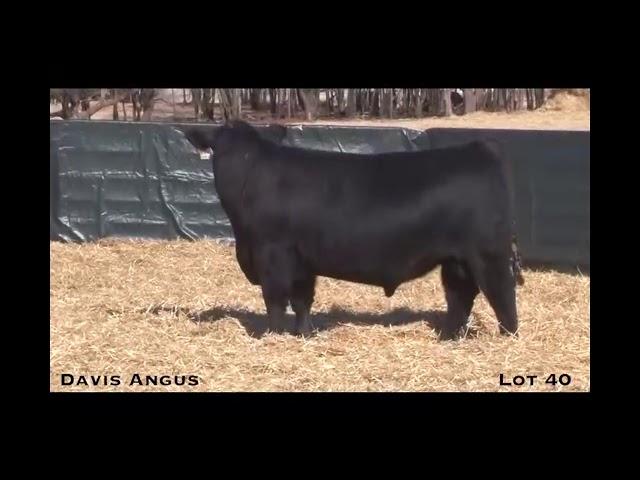 Davis Angus Lot 40