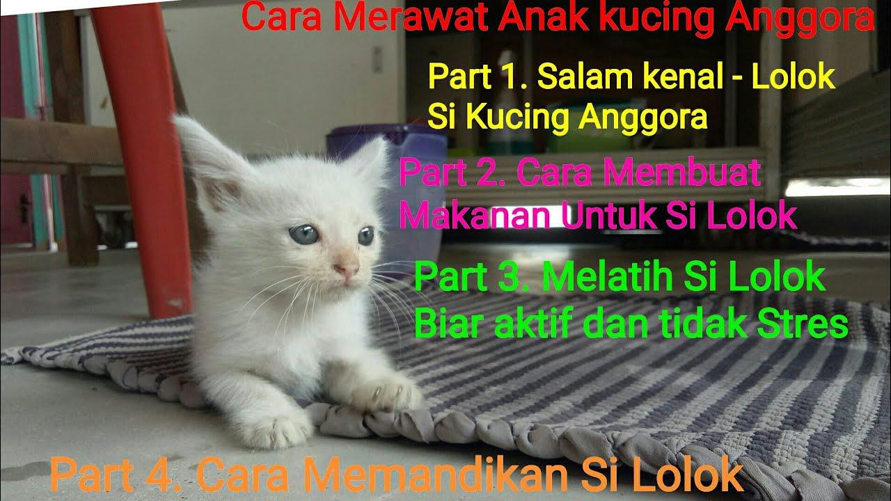 Cara Merawat Anak Kucing Anggora Part 3 Cara Bermain Dan