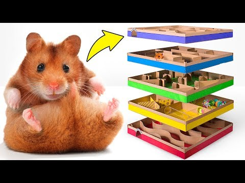 Amazing DIY 5-level Maze For Active Hamsters 🐹