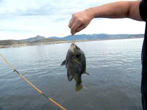 Diamond valley lake fishing youtube for Diamond lake fishing report