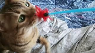 무는고양이 장난감은 깃털이직빵
