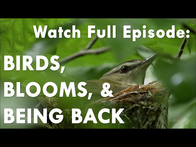 Birds, Blooms and Being Back - Great Lakes Now Full Episode - 1028