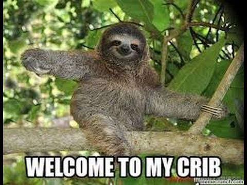 Funny Sloth Memes | 2014 | Animal Memes - YouTube